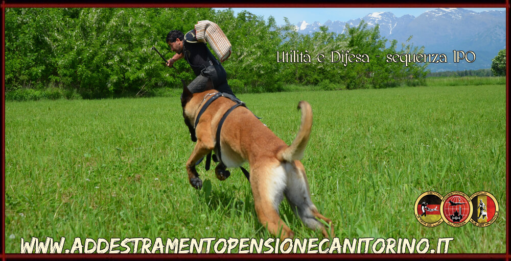 Addestramento cani multirazza - Centro Cinofilo La Tana dei Lupi