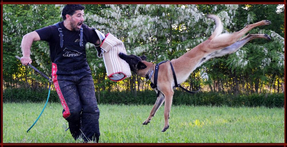 Addestramento Cani