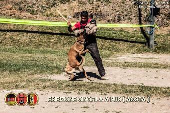Esibizione cinofila a Nus(Aosta) - 1