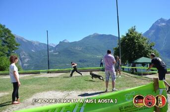 Esibizione cinofila a Nus(Aosta) - 10