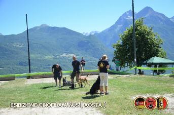 Esibizione cinofila a Nus(Aosta) - 8