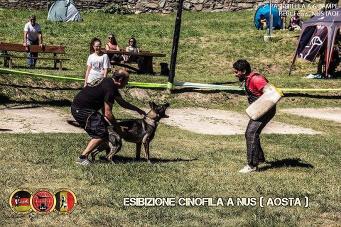 Esibizione cinofila a Nus(Aosta) - 9