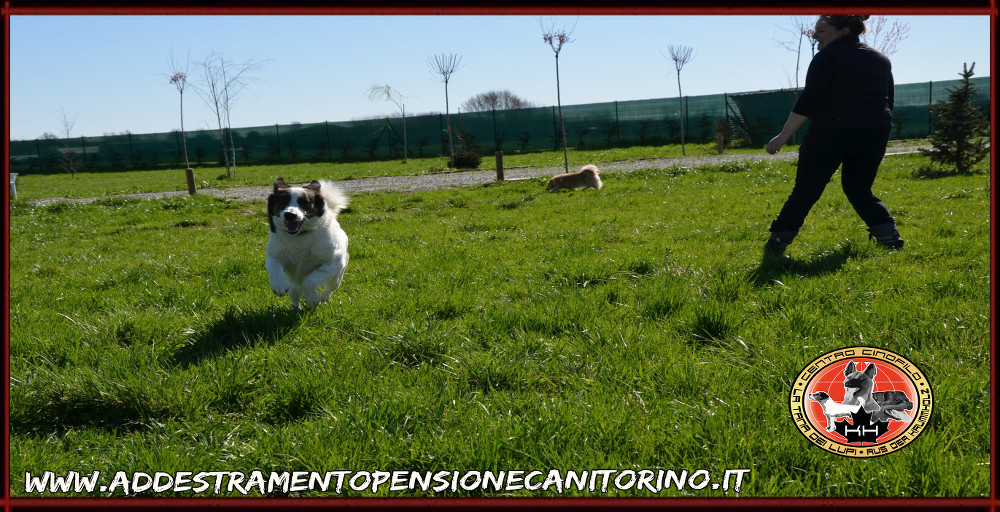 Pensione Cani, Gatti ed altri animali