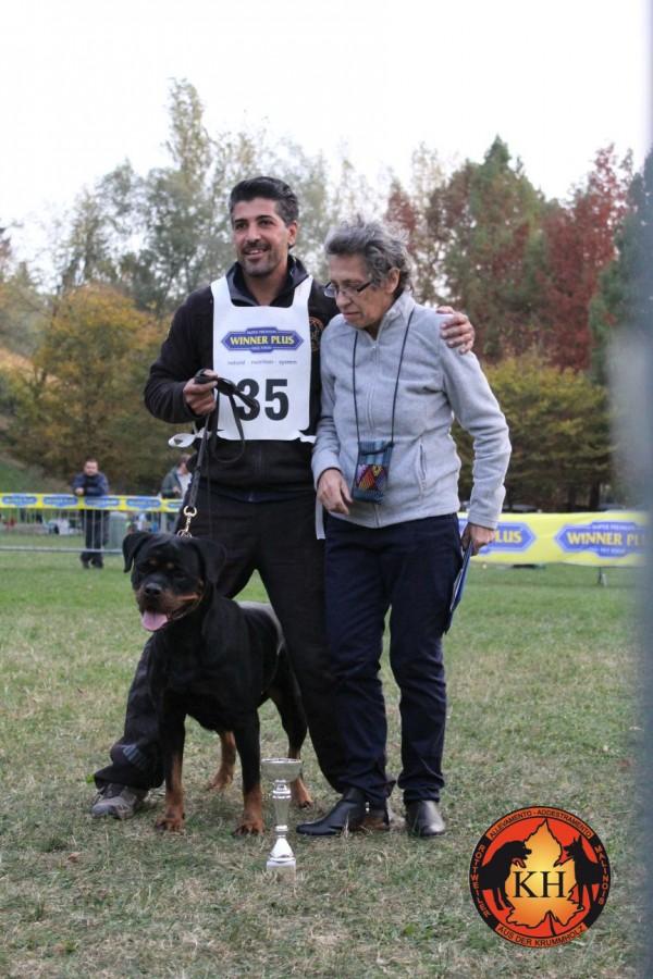 Migliore-Allevamento-Rottweiler-Piemonte-Rottweiler-Mercenasco-Torino-AUS-DER-KRUMMHOLZ–600×900
