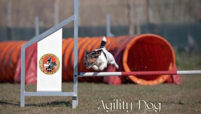 agility_dog