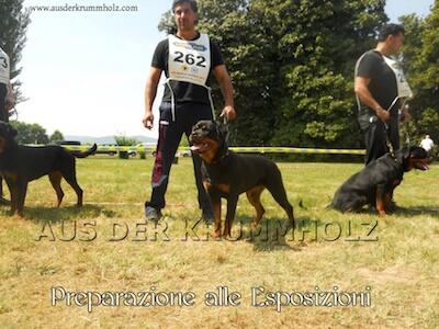 preparazione_esposizioni
