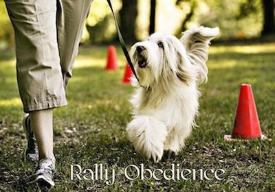 rally_obedience