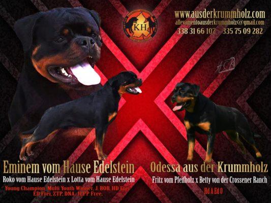 MIGLIORE-ALLEVAMENTO-ROTTWEILER-PIEMONTE-Rottweiler-aus-der-Krummholz-2-533×400