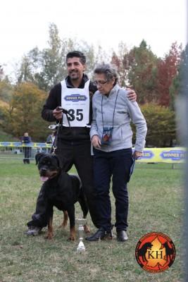 Migliore-Allevamento-Rottweiler-Piemonte-Rottweiler-Mercenasco-Torino-AUS-DER-KRUMMHOLZ-267×400