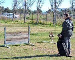 ADDESTRAMENTO CANI TORINO|Rottweiler Prova Utilità e Difesa IGP/IPO Centro Cinofilo LA TANA DEI LUPI Torino
