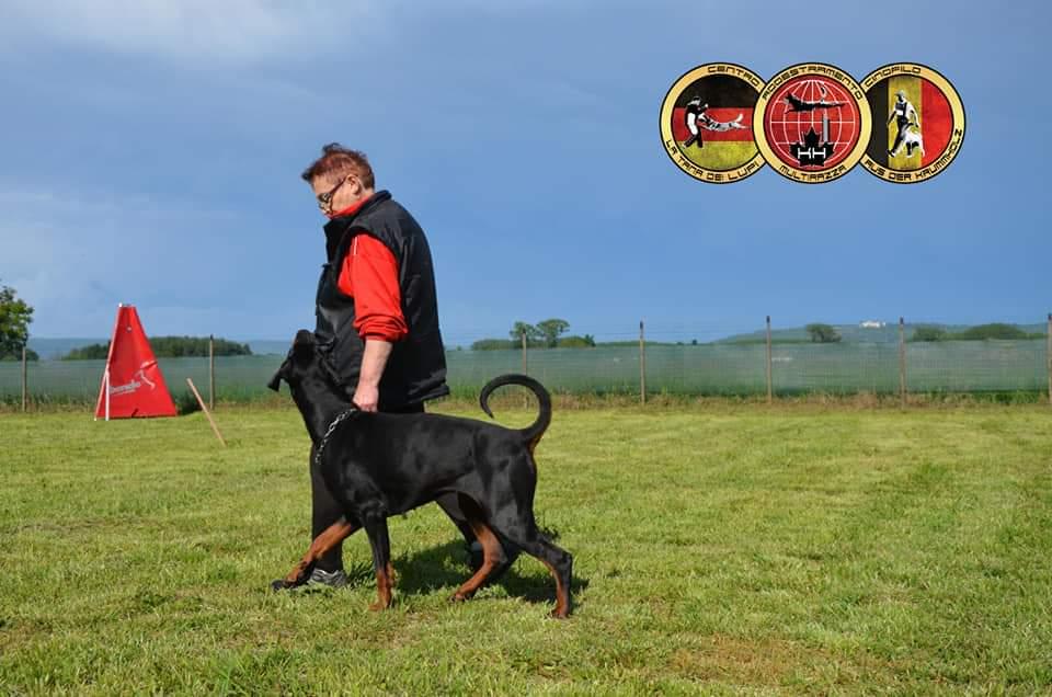 ADDESTRAMENTO CANI TORINOEducazione Cani Prova Utilità e Difesa Centro Cinofilo LA TANA DEI LUPI Torino –