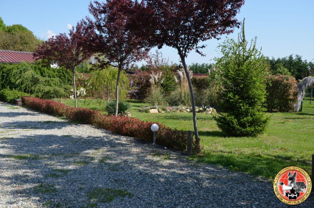 Centro Cinofilo LA TANA DEI LUPI Allevamento Rottweiler e Malinois Addestramento Cani Multi Razza Pensione Cani e Gatti a Mercenasco Torino Piemonte 3